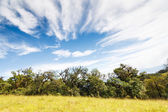 雨林和蓝蓝的天空 — 图库照片