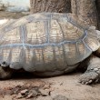 Old Turtle — Stock Photo