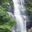 Beautiful rain forest and waterfall — Stock Photo