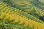 Rice terraces in the mountains — Stock Photo