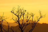 Beautiful sunset and dead tree — Stock Photo