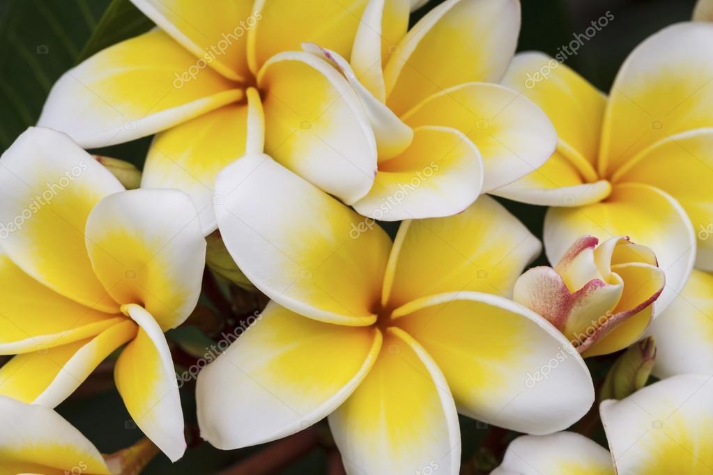 фото тропических цветов: