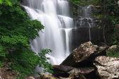 Beautiful waterfall and green maple. — Stock Photo