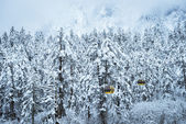 Snow scene of forest — Foto Stock