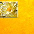 Yellow floral background — Stock Photo