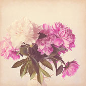 Pink peony vintage background — Stock Photo