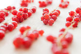 Redcurrant bunches — Stock Photo