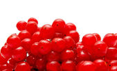 Red viburnum isolated — Foto Stock