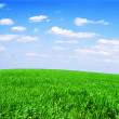Field of grass and perfect sky — Stock Photo #26082345