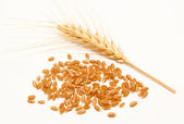 Wheat ears and seed isolated on a white — Stock Photo