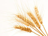 Wheat ears isolated on a white — Stock Photo