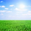 Field of grass and perfect sky — Stock Photo #38555863