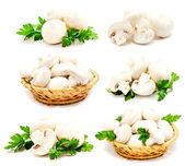 Collection of champignon mushroom white agaricus isolated — Stock Photo