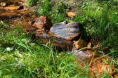 Forest Streamlet. — Stock Photo