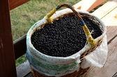 Basketful of black berries - black chokeberry. — Stock Photo