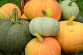 Rich harvest of pumpkins. — Stock Photo