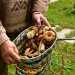 Wild mushrooms in a basket, in the hands of men. — Stock Photo