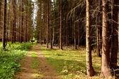 Strada forestale — Foto Stock