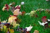 Green grass, fallen autumn leaves. — Stock Photo