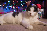 Christmas Cat — Stock Photo