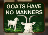 Goats Have No Manners — Stock Photo
