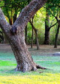 Stromu — Stock fotografie