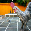 Stock Photo: Seriously rooster