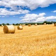 Stock Photo: Straw bales field