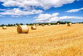 Straw bales field — Stock Photo