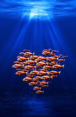 Fish swarm forming a heart — Stock Photo