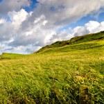 Causeway coast grassland — Stock Photo #7621109