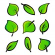 Set of green leaves. Element for design. — Stock Vector