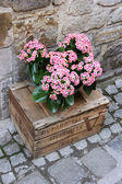 Romantic flowers — Stock Photo