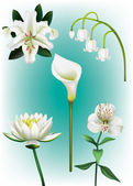 Five white lily vector illustrations — Stock Vector
