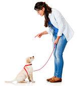 Woman training her dog — Stock Photo