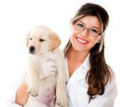 Vet holding a little dog — Stock Photo