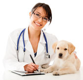 Vet using technology — Stock Photo