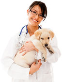 Vet holding a little puppy — Stock Photo