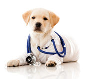 Little dog as a vet — Stock Photo