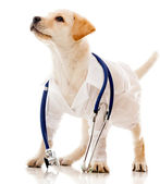 Dog dressed as a vet — Stock Photo
