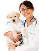 Puppy dog at the vet — Stock Photo