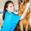Beautiful dog at the vet - Stockfoto