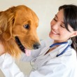 Stock Photo: Vet examining a dog