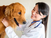 Vet examining a dog — Stock Photo