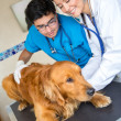 Stock Photo: Dog at the vet