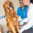 Doctors examining a dog - Stock Photo
