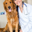 Dog at the vet — Stock Photo
