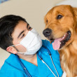 Veterinarian checking a dog — Stock Photo
