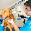 Grooming dog at vet — Stok Fotoğraf #23223922