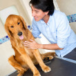 Man taking dog to the vet - Stock Photo